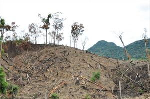 Lào Cai: Khởi tố 10 đối tượng phá rừng phòng hộ