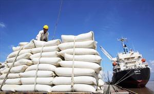 """Không đấu thầu hạn ngạch xuất khẩu gạo, Bộ Công Thương muốn """"chơi game show""""?"""