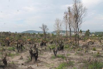 Chính phủ yêu cầu xử lý cán bộ để xảy ra sai phạm đất đai tại Phú Quốc