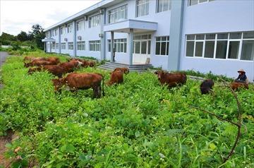 Bệnh viện nghìn tỷ vùng Tây Nguyên: Xây gần chục năm chỉ để nuôi bò?