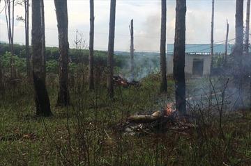 Đắk Nông: Thu hồi dự án 162 ha đất và rừng giao cho doanh nghiệp