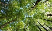 Những tán cây xanh