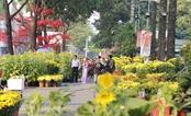 Chợ hoa, và không chỉ chợ...