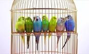 """Tiếng chim hót trong """"rừng"""" bê tông"""
