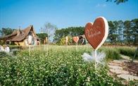 Tận hưởng cánh đồng tam giác mạch đẹp mê mải ngay ở Hà Nội