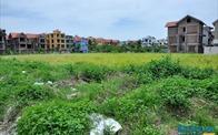 Hà Nội: Lập Ban Chỉ đạo đôn đốc thu hồi nợ đọng thuế và nợ tiền sử dụng đất