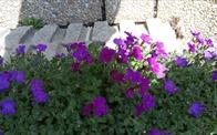 Madam Mimi và công viên hoa của chúng tôi