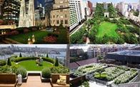 Không gian sống xanh, ước vọng của người dân đô thị