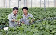 Không đi một mình, nông nghiệp Việt Nam cần gì để bứt phá?