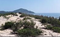 """Đất nền chỉ """"bụi cây trong cát trắng"""" tại Lăng Cô (Thừa Thiên Huế) bất ngờ sốt nóng"""
