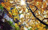 Dự báo thời tiết ngày 8/11/2019: Hà Nội ngày nắng nóng