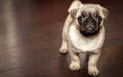 Những lưu ý phong thủy khi nuôi thú cưng trong nhà để tránh mất lộc