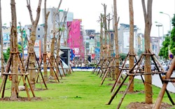 Hà Nội trồng thêm gần 140.000 cây xanh