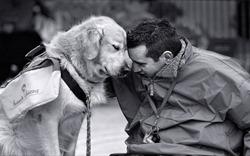 Năm Tuất và món Chó