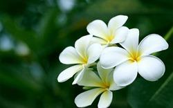 Hoa là vị Bồ tát