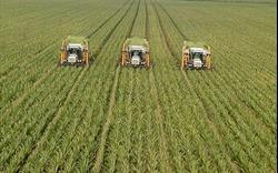 Cuộc cách mạng nông nghiệp và sự nở rộ của siêu trang trại