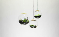 """""""Bóng đèn sinh thái"""": Phát kiến tuyệt vời trồng cây xanh trong điều kiện không ánh sáng mặt trời"""