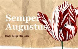 Bông hoa tulip dính virus đã tạo nên bong bóng tài chính nổi tiếng nhất lịch sử nhân loại như thế nào?
