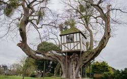 Nhà cây: Để thêm gần gũi với nhân bản