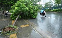 Dự báo thời tiết ngày 14/6/2020: Hà Nội mưa dông trên diện rộng