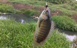 Ai đi bắt cá rô chết cóng không...