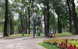Quy hoạch cây xanh ở công viên như thế nào mới chuẩn?