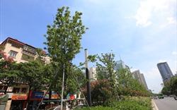 Hà Nội: Hệ thống cây xanh đã thay đáng kể sự bức nhiệt đô thị
