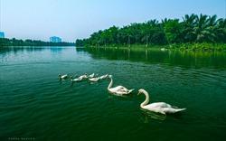 Khám phá vẻ đẹp bền vững tại những căn biệt thự đảo triệu đô Ecopark