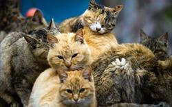 Phần 3: Trong thế giới của những chú mèo và chó hoang