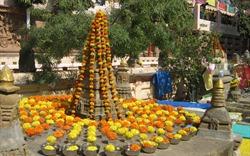Đi và thấy cúc vạn thọ ở xứ Ấn