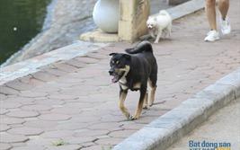 """Cư dân bất an vì chó thả rông, không rọ mõm """"đại náo"""" công viên"""