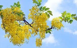 Dự báo thời tiết ngày 3/6/2020: Hà Nội nắng nóng gay gắt