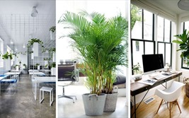 Những nguyên tắc bố trí cây xanh trong văn phòng