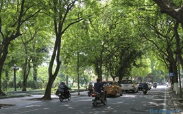 Giảm nhiệt đô thị nhờ hệ thống cây xanh