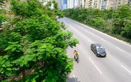 Hà Nội trồng được hơn 67.700 cây xanh trong 6 tháng đầu năm 2020