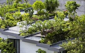 """Những ngôi nhà """"phủ"""" cây xanh, mỗi buổi sáng chim hót líu lo như trong rừng"""