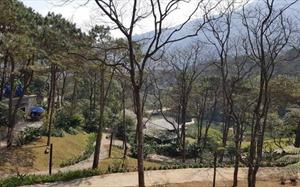 Hà Nội: Phát hiện 14 dự án chuyển đổi mục đích sử dụng đất chưa trồng rừng thay thế