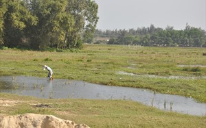 Quảng Nam bổ sung 18 danh mục dự án thu hồi và chuyển mục đích sử dụng đất lúa