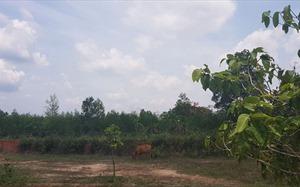 Đồng Nai: Kê biên, định giá các thửa đất liên quan Công ty Alibaba