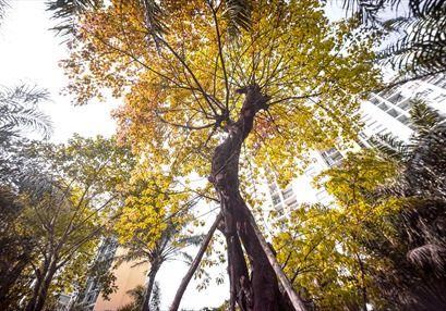 Khu đô thị Ecopark - Nơi con người hòa quyện với thiên nhiên